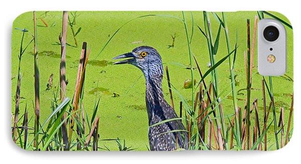 Inmature Black Crowned Heron. IPhone Case