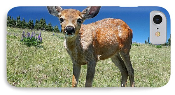 Inquisitive Blacktail Fawn IPhone Case