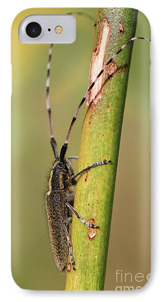 Insect On A Branch IPhone Case by Stephan Grixti