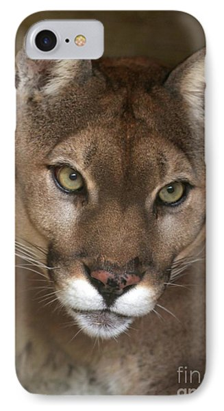 Intense Cougar Phone Case by Sabrina L Ryan