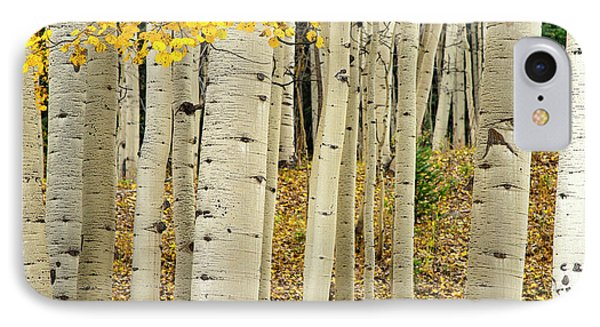 IPhone Case featuring the photograph Into The Forest by Gary Lengyel