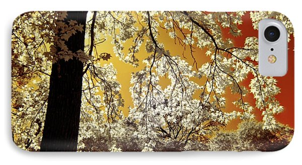 IPhone Case featuring the photograph Into The Golden Sun by Linda Unger