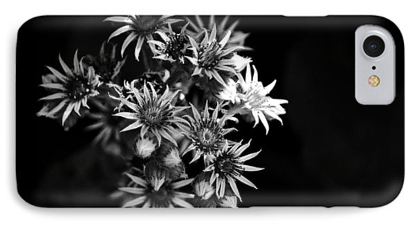 Into The Light IPhone Case by Silke Brubaker