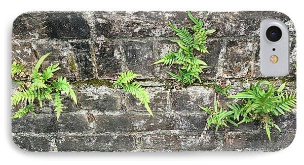 Intrepid Ferns IPhone Case by Kim Nelson