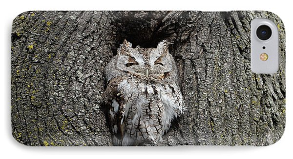 Invincible Screech Owl IPhone Case by Stephen Flint