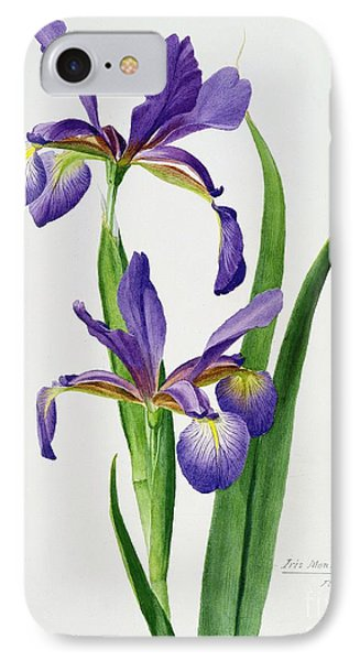 Iris Monspur IPhone Case by Anonymous