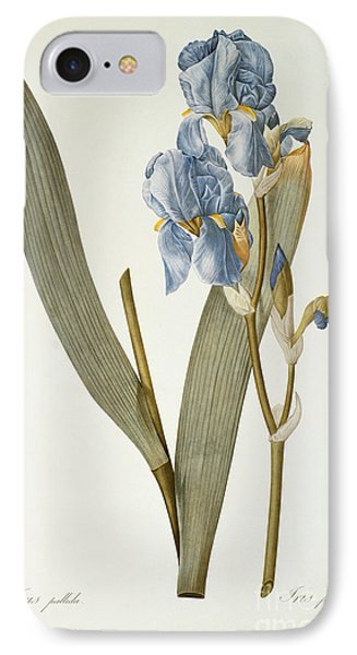 Iris Pallida IPhone Case by Pierre Joseph Redoute