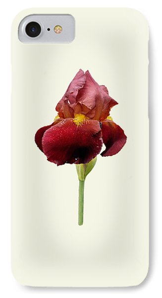 IPhone Case featuring the photograph Iris Vitafire Cream Background by Paul Gulliver