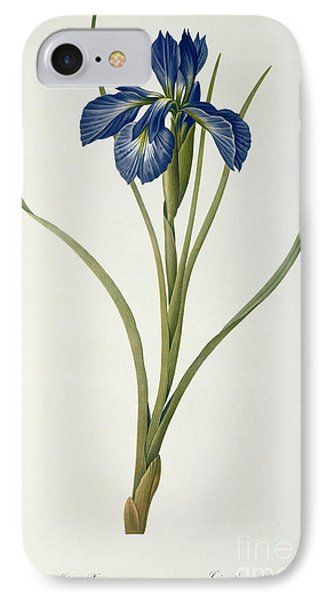 Iris Xyphioides IPhone Case by Pierre Joseph Redoute