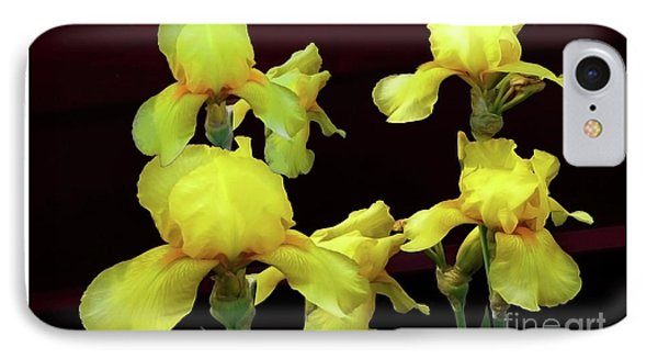 Irises Yellow IPhone Case by Jasna Dragun
