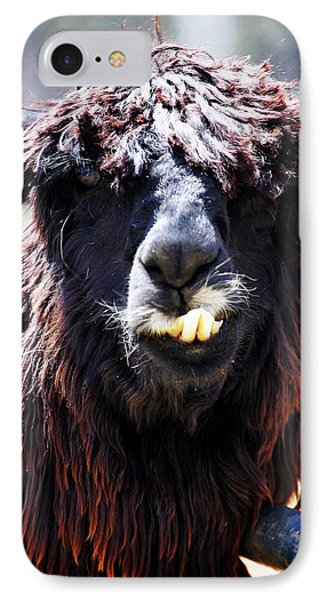 IPhone Case featuring the photograph Is Your Mama A Llama? by Anthony Jones