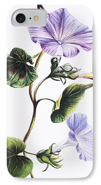 Isabella Sinclair - Pohue Phone Case by Hawaiian Legacy Archive - Printscapes