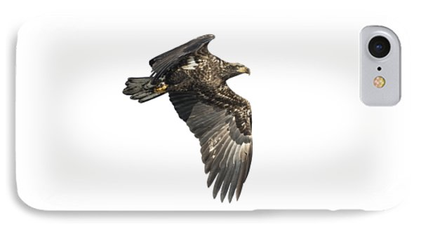 IPhone Case featuring the photograph Isolated Eagle 2017-2 by Thomas Young