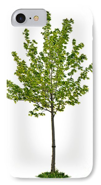 Isolated Young Maple Tree IPhone Case