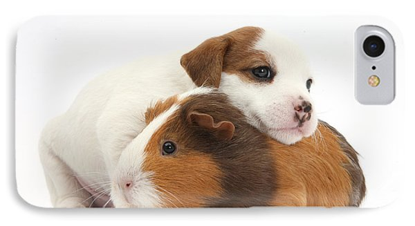 Jack Russell Terrier Puppy Guinea Pig IPhone Case by Mark Taylor