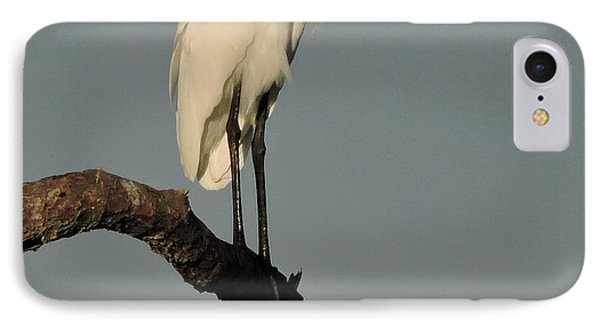 January Egret IPhone Case by Peg Toliver