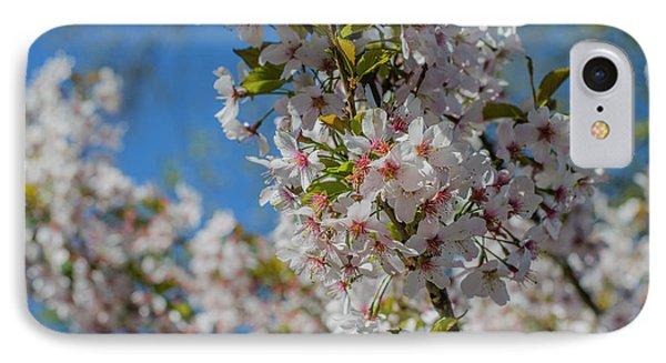 Japanese Cherry  Blossom IPhone Case by Daniel Precht