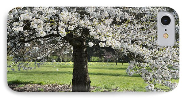 Japanese Cherry Tree IPhone Case by Tim Gainey