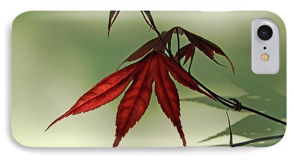 IPhone Case featuring the photograph Japanese Maple Leaf by Ann Lauwers