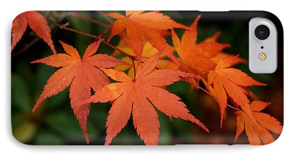 Japanese Maple Leaves IPhone Case by Patricia Strand