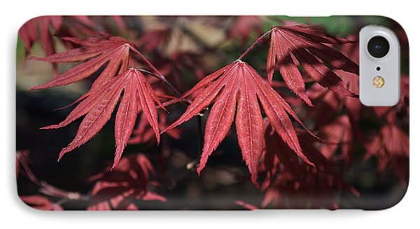 Japanese Maple IPhone Case by Mary Zeman