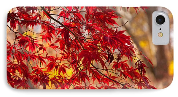 Japanese Maples IPhone Case by Susan Cole Kelly