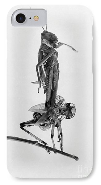 Jerusalem: Locusts, 1915 Phone Case by Granger