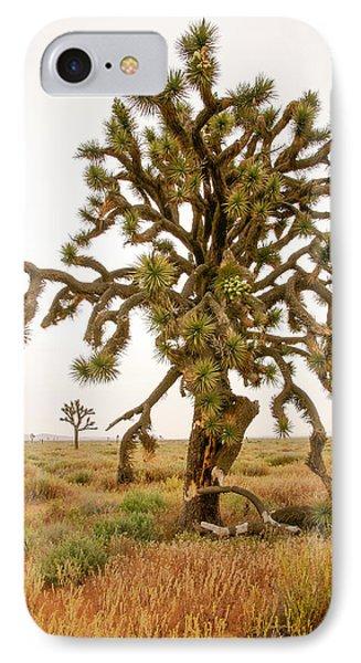 Joshua Trees In Desert IPhone Case