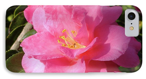 Joy In The Morning IPhone Case by Diane Ferguson