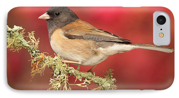 IPhone Case featuring the photograph Junco Against Peach Blossoms by Max Allen