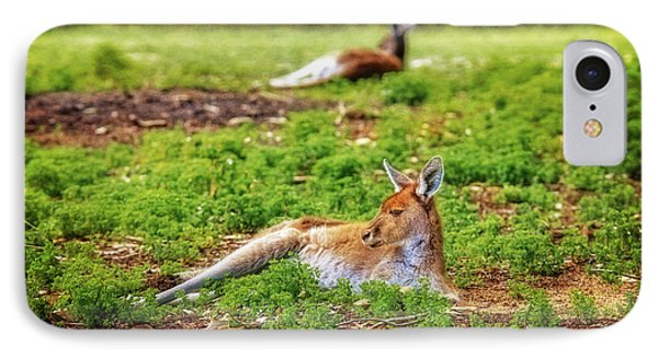 Just Chillin, Yanchep National Park IPhone Case by Dave Catley