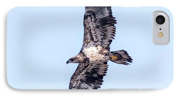 Juvenile Bald Eagle 2017 Phone Case by Ricky L Jones