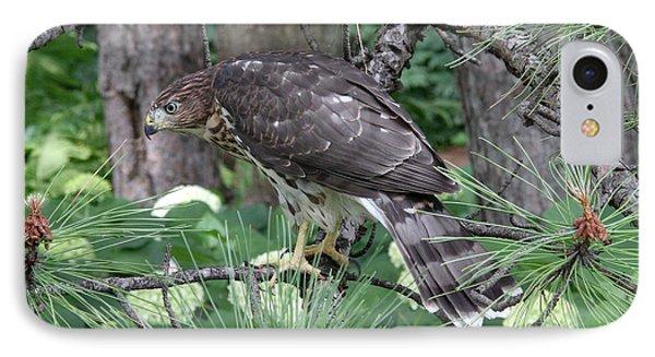 Juvenile Cooper's Hawk IPhone Case