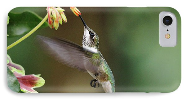 Juvenile Male Ruby Throat IPhone Case by Debbie Oppermann