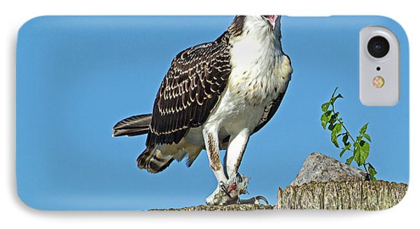 Juvenile Osprey#1 IPhone Case by Geraldine DeBoer