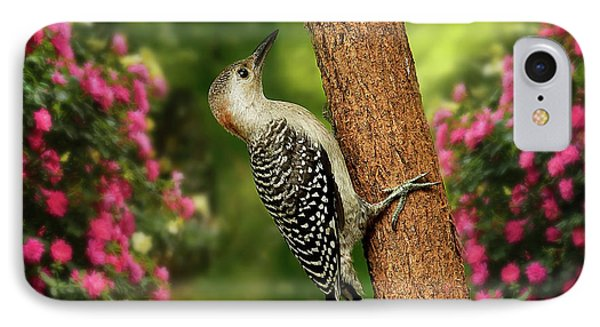 IPhone Case featuring the photograph Juvenile Red Bellied Woodpecker by Darren Fisher