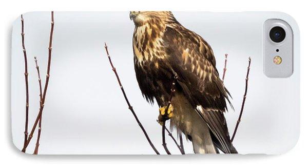 Juvenile Rough-legged Hawk  Phone Case by Ricky L Jones