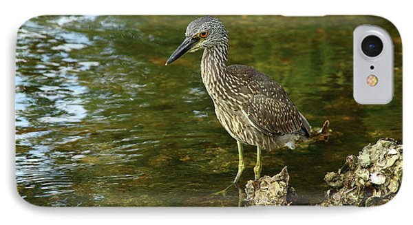 Juvenile Yellow Crowned Night Heron IPhone Case by Christiane Schulze Art And Photography