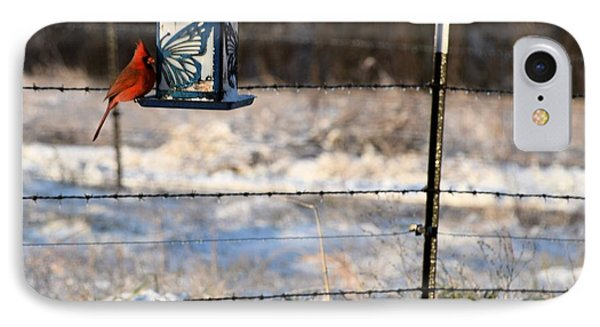 Kansas Cardinal At The Feeder IPhone Case