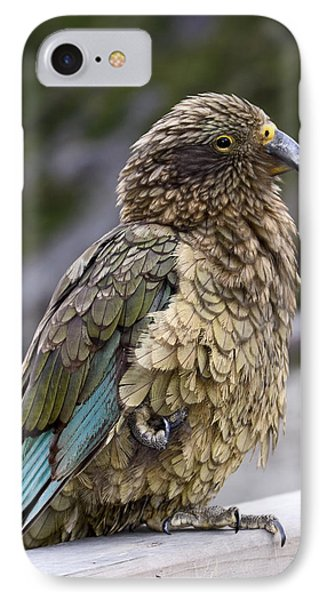IPhone Case featuring the photograph Kea Bird by Sally Weigand