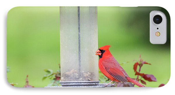 IPhone Case featuring the photograph Kentucky Cardinal  by Ricky L Jones
