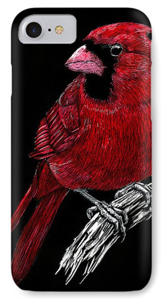 Kentucky Cardinal IPhone Case