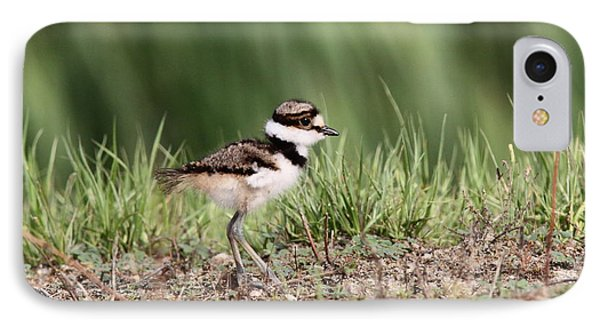 Killdeer - 24 Hours Old IPhone Case
