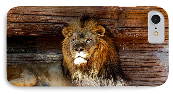 King Of The Jungle IPhone Case by Linda Brown