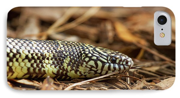 IPhone Case featuring the photograph King Snake 1 by Arthur Dodd