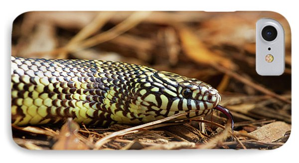 IPhone Case featuring the photograph King Snake 2 by Arthur Dodd
