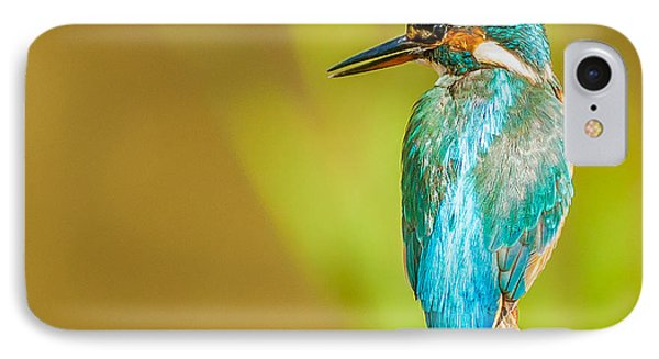 Kingfisher IPhone Case by Paul Neville
