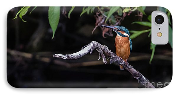 Kingfisher IPhone Case by Torbjorn Swenelius