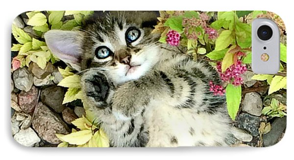 Kitten Dreams IPhone Case by Kathy M Krause