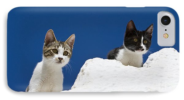 Kittens On A Greek Island IPhone Case by Jean-Louis Klein & Marie-Luce Hubert